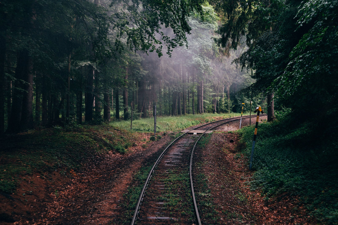 A railtrack going through the forest